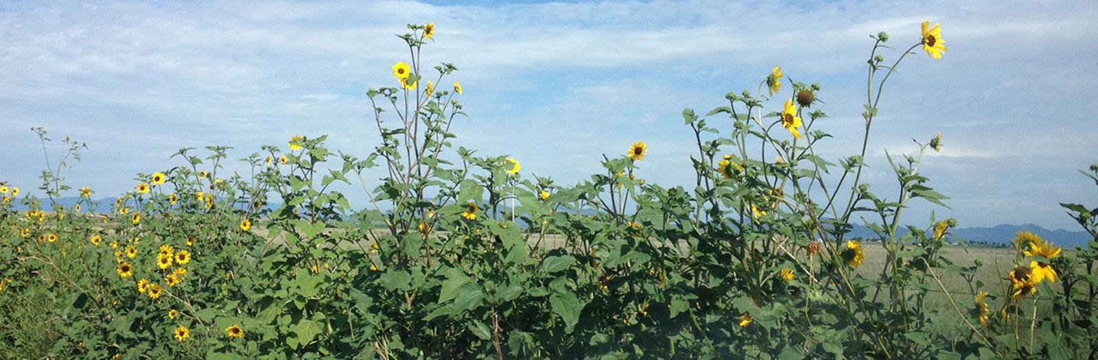 slider-flowers2